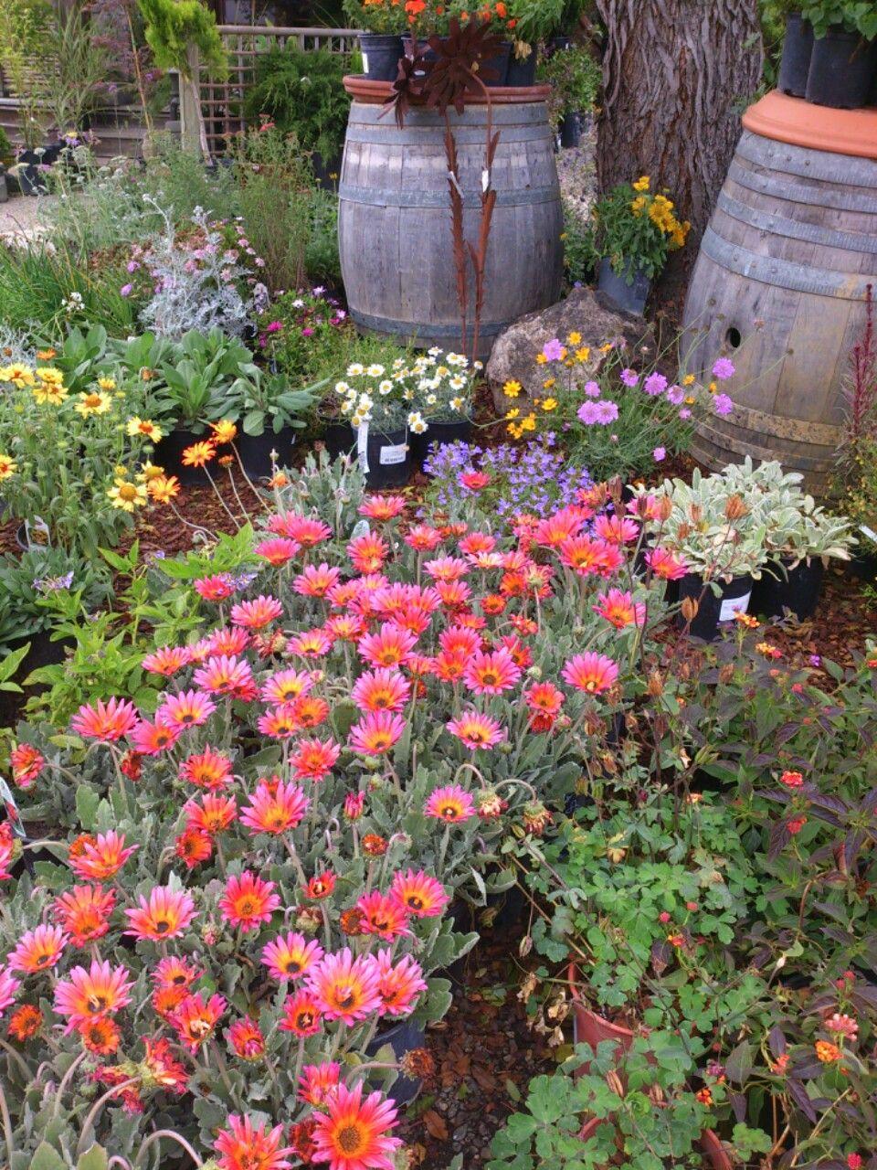 Cambria Nursery A Favorite Gardening Backyard Cottage Serenity Garden Nursery