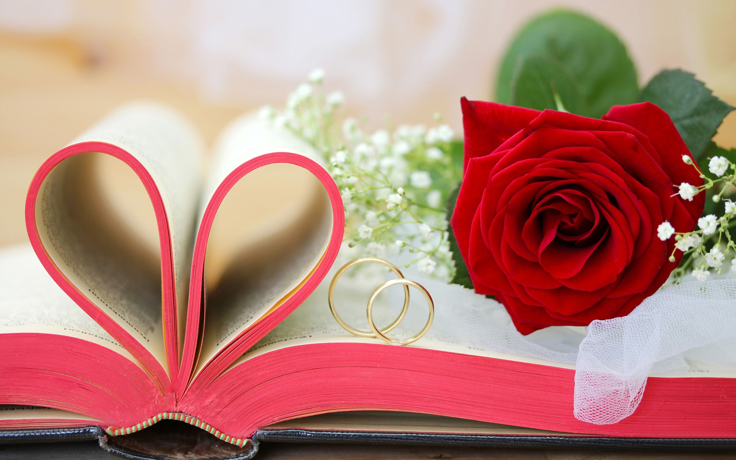 Wedding wishes rose rings hd wallpaper Happy