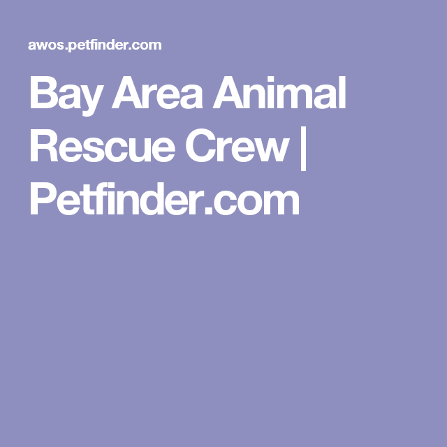 Get To Know Bay Area Animal Rescue Crew Animal Rescue Rescue Animals