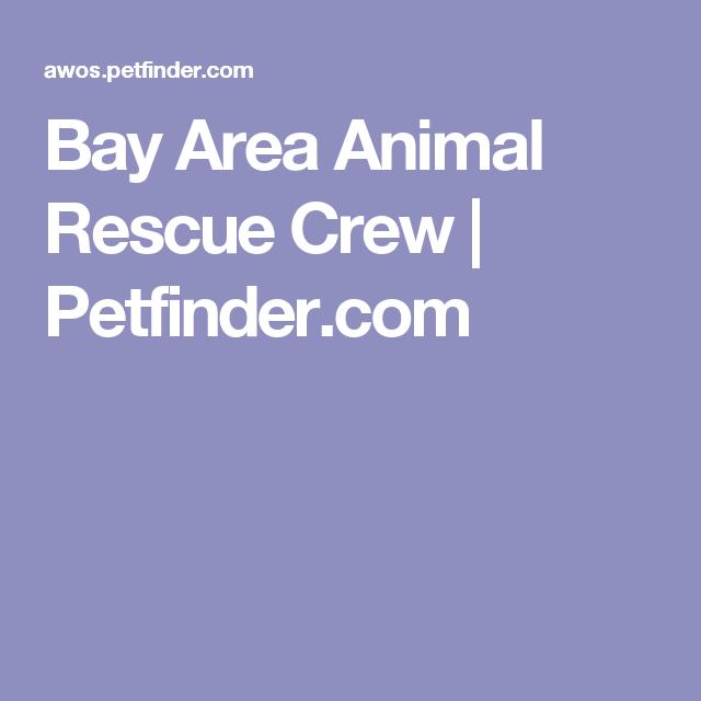 Get To Know Bay Area Animal Rescue Crew Animal Rescue Rescue Animals