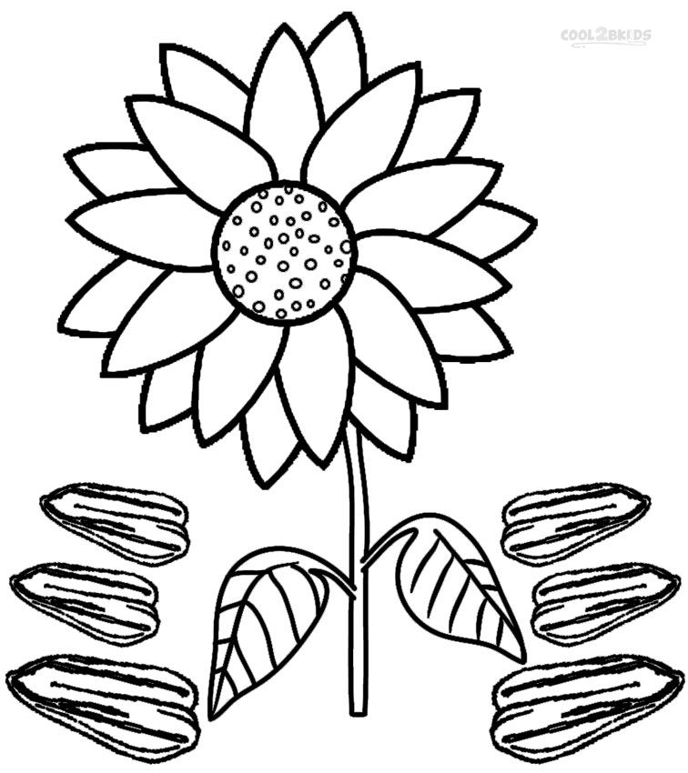 Printable Sunflower Coloring Pages For Kids Cool2bKids Plant