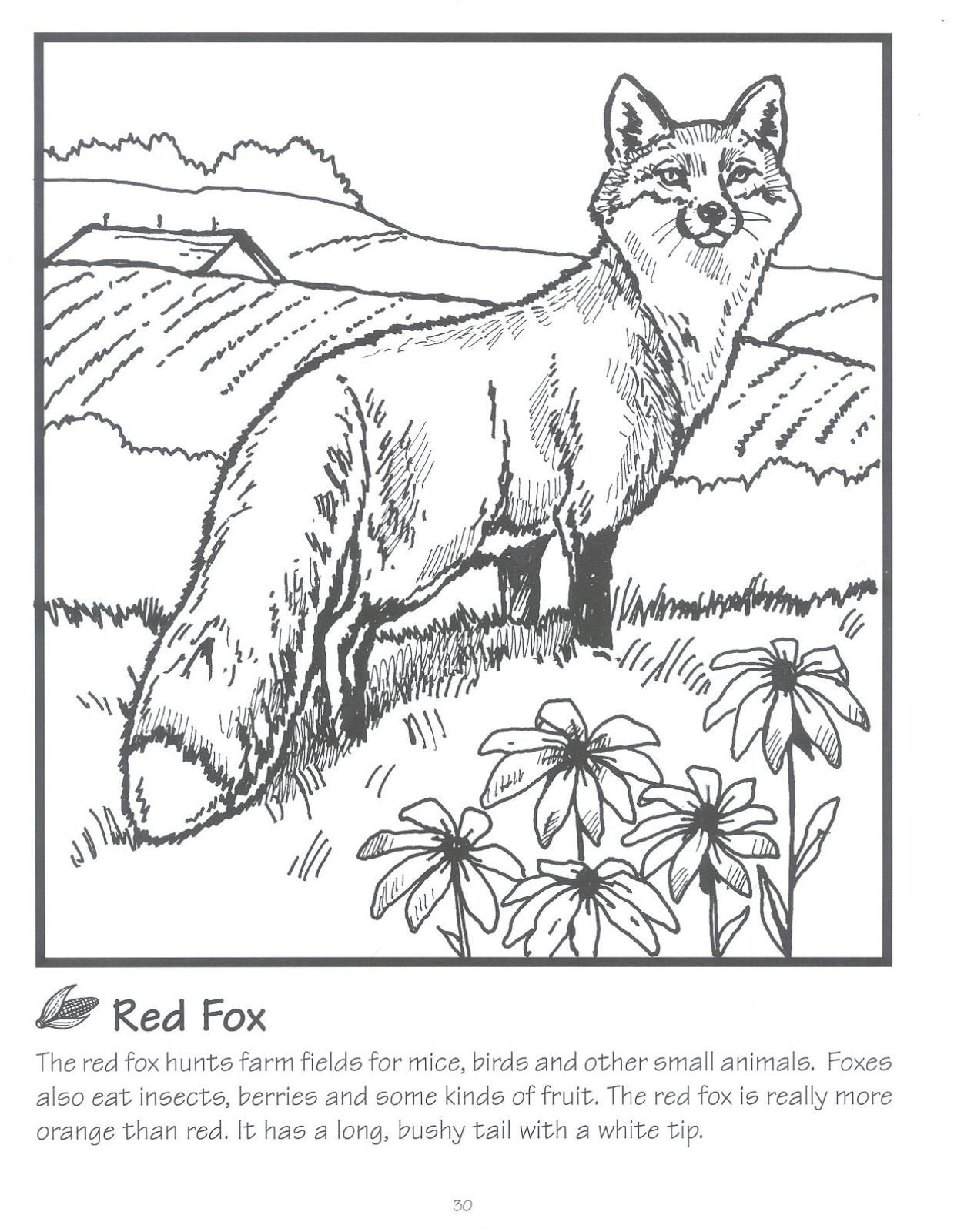 Red Fox Jpg 1239 1600 With Images Fox Coloring Page Animal
