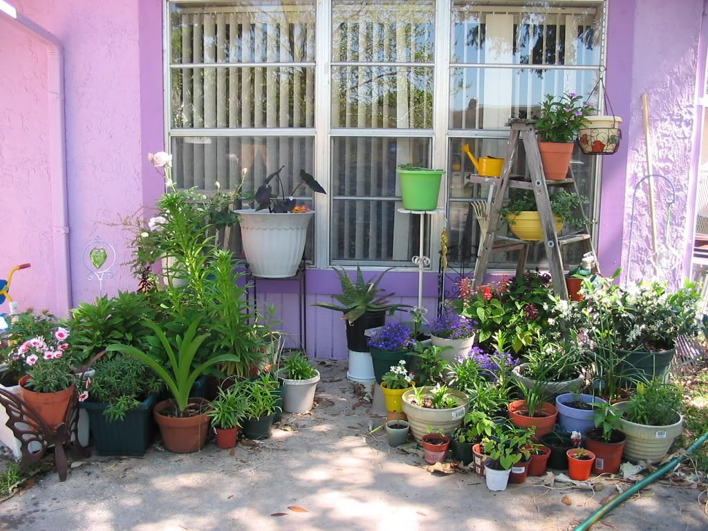I like the ladder used as a plant stand and the variety of pots and ...