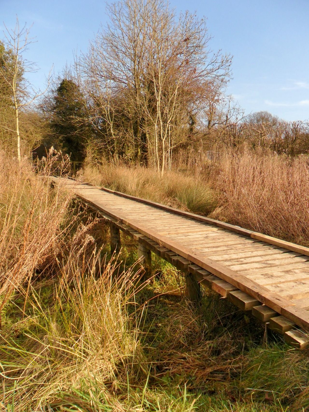 cinderdream: Walkway over the marshes, Hayhead Woods, Aldridge ...