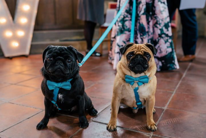 Freyja And Vicki S Pug Friendly Leeds Wedding With Two Ceremonies