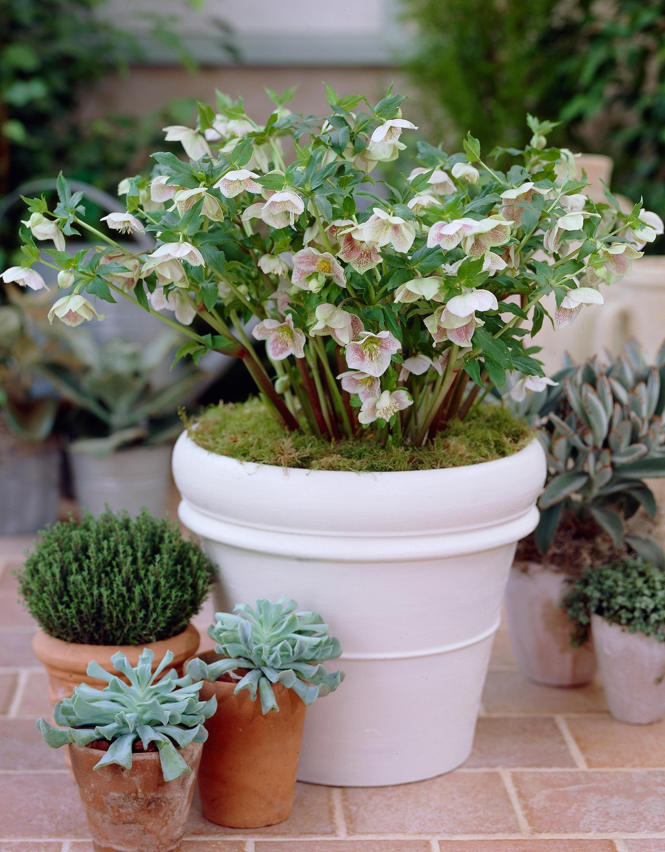 Que faire au jardin en décembre? Jardins, Jardinage et