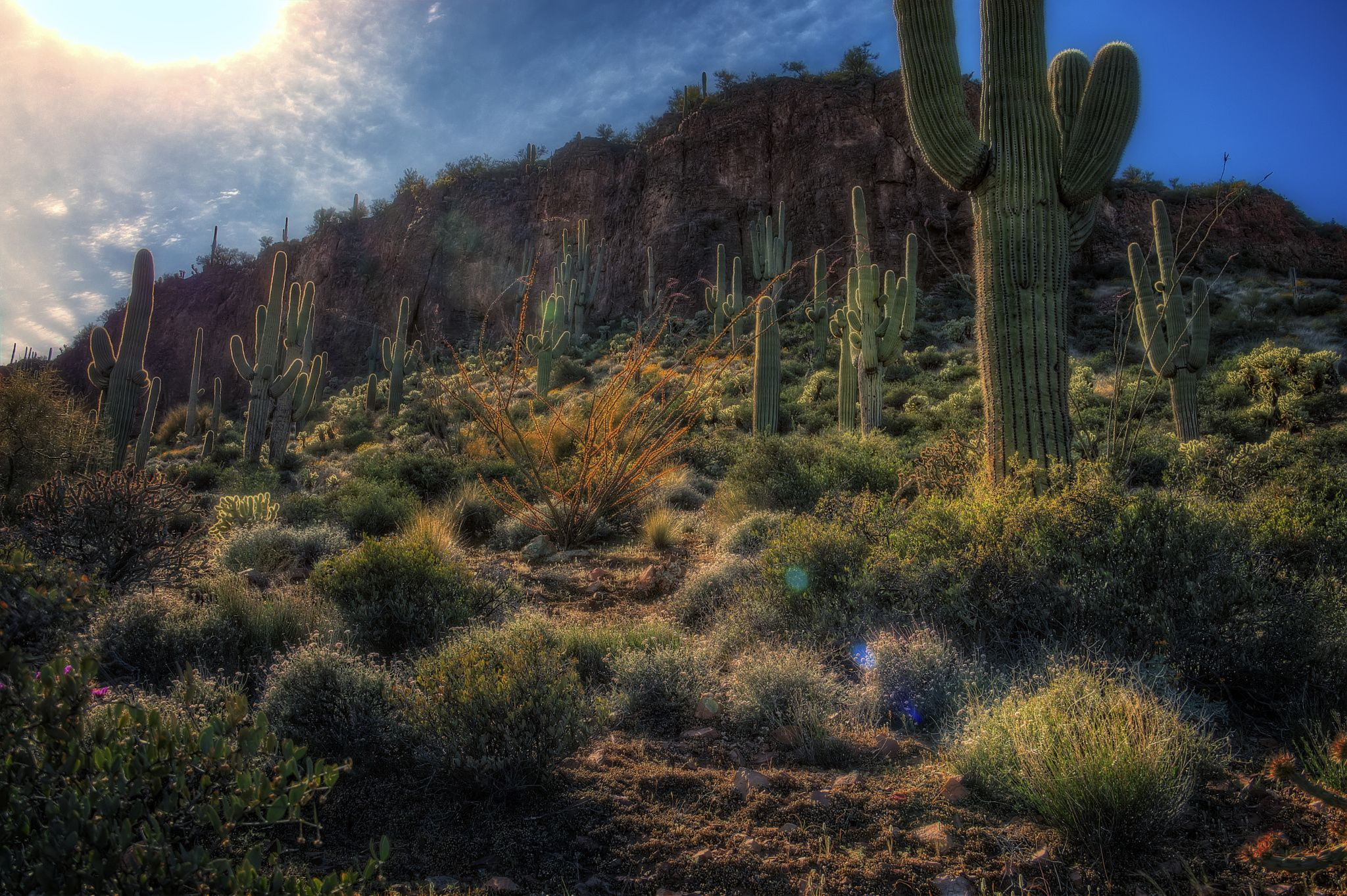 Desert Garden by Randy Dietmeyer on 500px