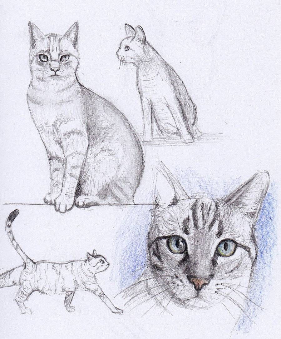 Cat Drawing cats and owls