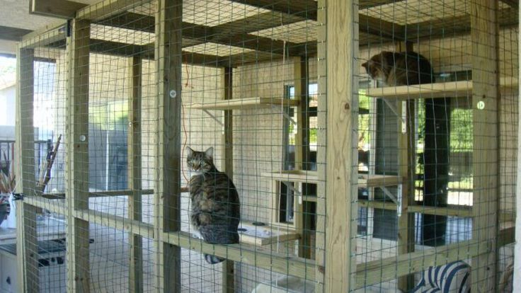Cat enclosures do it yourself outdoor cat cages cat