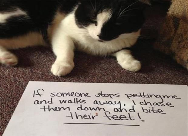 Il Bite Your Feet Cat Shaming Funny Cat Photos Funny Cats