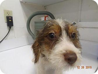 Pin By Uber Wagmore On Adopt A Hound Otterhound Pets