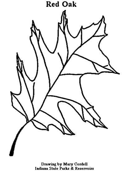 Coloring Page Of A Oak Leaf
