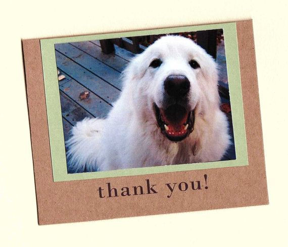 Dog Rescue Thank You Note cards 50 donation by WarbleswithBella - thank you notes for donation