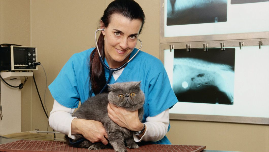 How to Have a Successful Vet Visit With Your Cat Cats