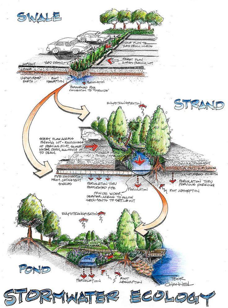 Stormwater Ecology Stormwater, Ecology design, Rain garden