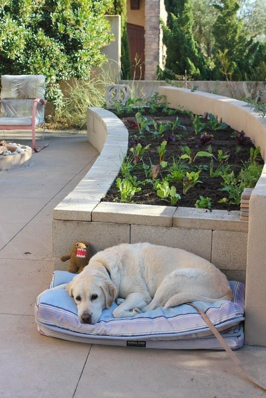 25 Raised Garden Beds That Will Inspire You To Actually Grow Veggies This Year Cinder Block Garden Garden Beds Raised Garden Beds
