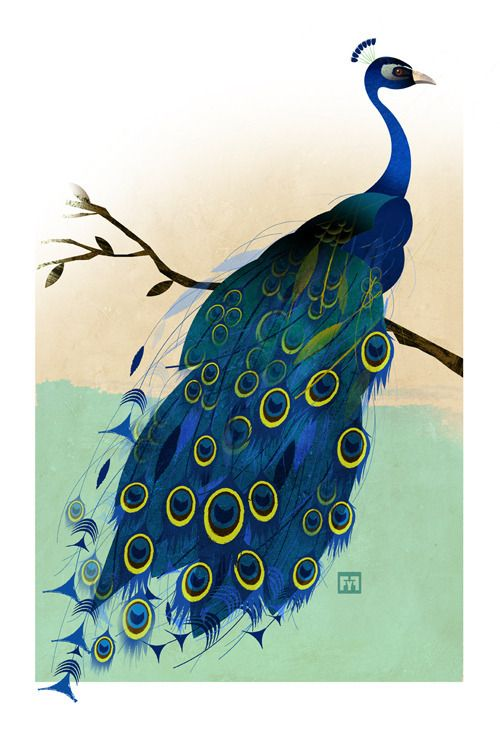 The Peacock   animales   Pinterest   Pavos reales, Pavo y Animales