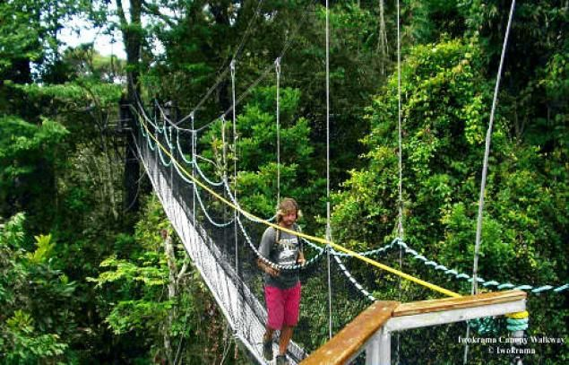 Pin by Emma Lewis on Caribbean | Ecotourism, Guyana, Tourism