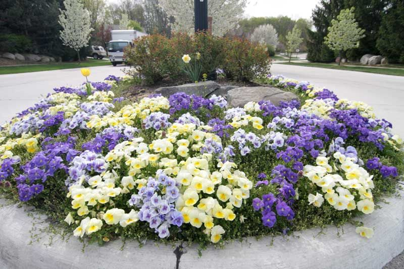 Flower Bed Designs With Petunias Flower Bed Installations Petunia Flower Flower Bed Designs Annual Flower Beds