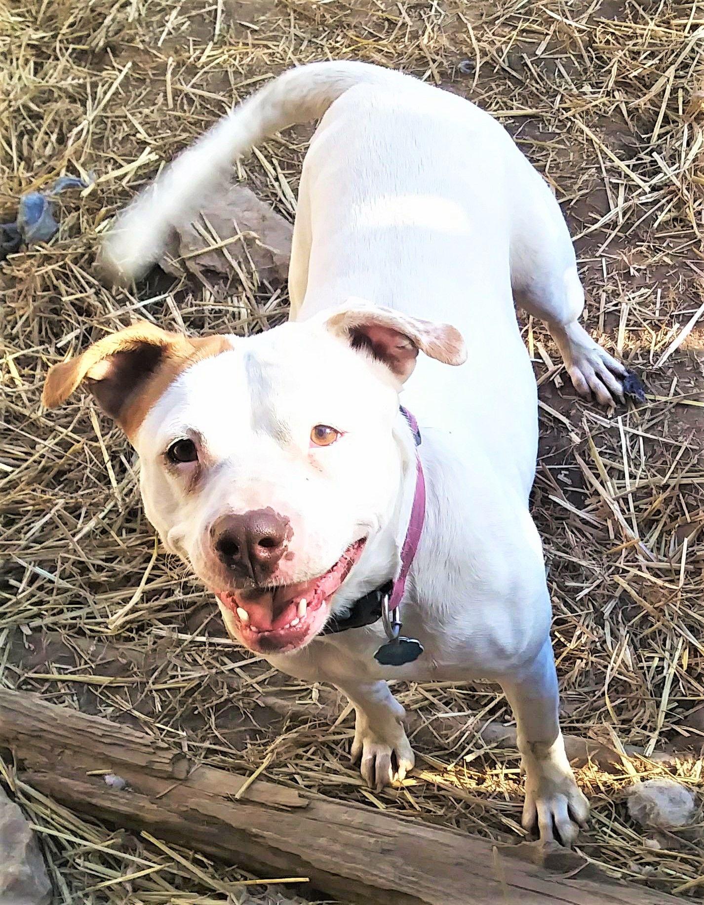 Pin On Adopt A Doggo