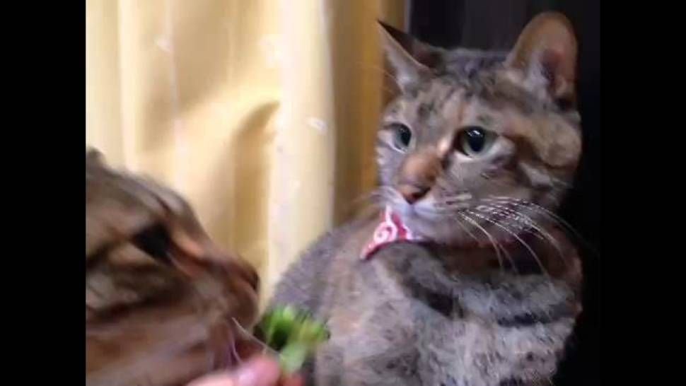 woman marries cat
