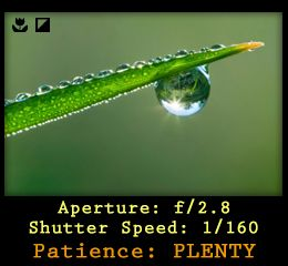 1000  images about macro photo on Pinterest