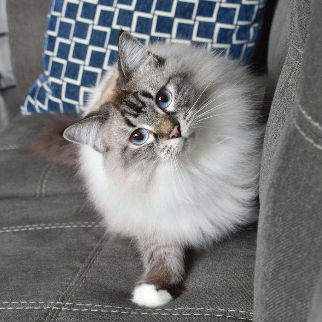Why u hidin me treats lady? Cute animals, Pets, Peeking cat