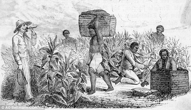 "plantation system in the caribbean The plantation system thrived and expanded through the following years ""the caribbean was a major plantation that was a big source of europe's sugar."