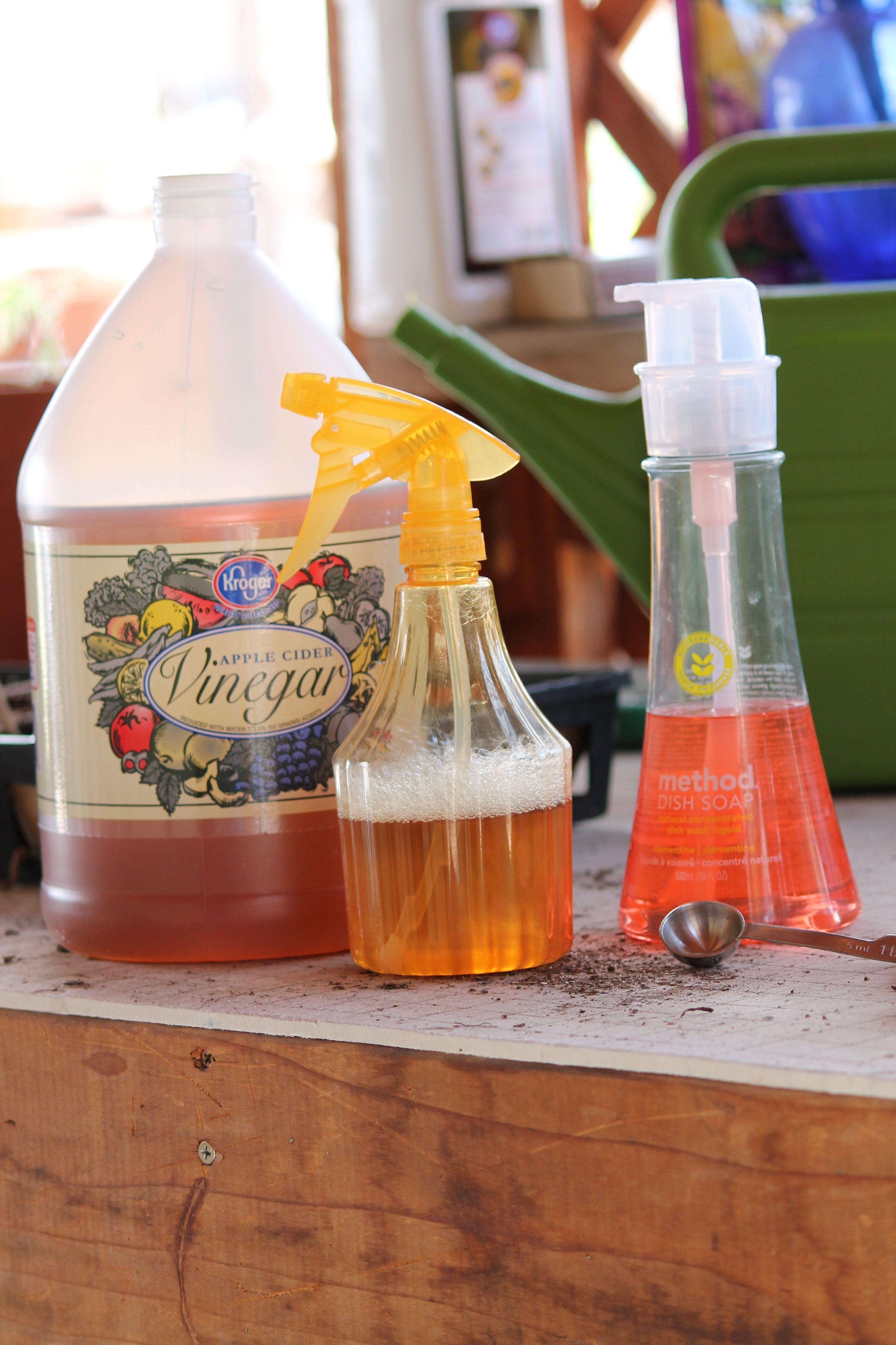 Can vinegar really kill weeds?  You betcha!