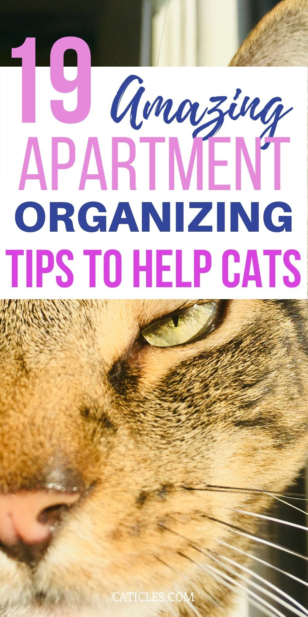 19 Game Changing Ideas for Cats in Small Apartments ...