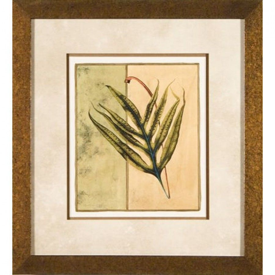 Phoenix Galleries Fern 3 Framed Print - OWP11664 | For the Home ...