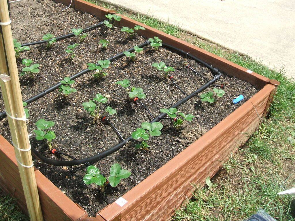 Drip Irrigation Save The World By Saving Water Garden Layout Vegetable Drip Irrigation Winter Vegetables Gardening