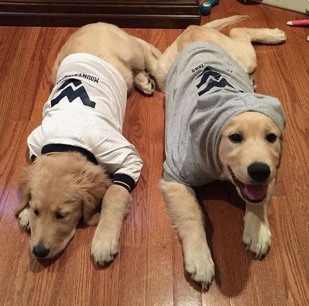 Just Two Pups Who Love The Mountaineers Wvu Mountaineers Letsgomountaineers Westvirginia Westvirginiauniversity Morgantown Dogs Pets Dog Cat Pup Dogs
