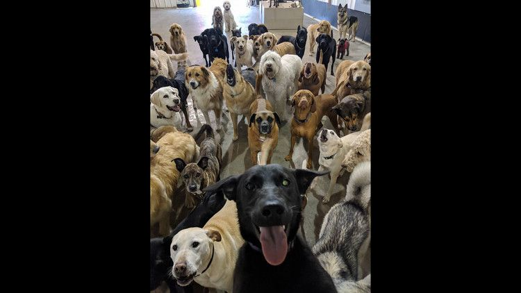 Pack Of Dogs Pose For World S Cutest Selfie Cbs News Dog Poses Dogs Doggy