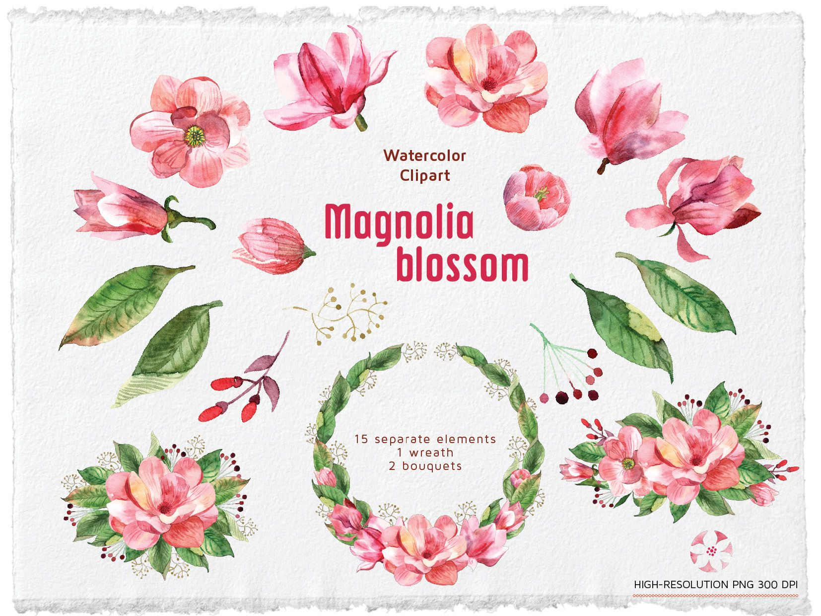Watercolor Magnolia Clipart Watercolour Flowers Clip Art Set