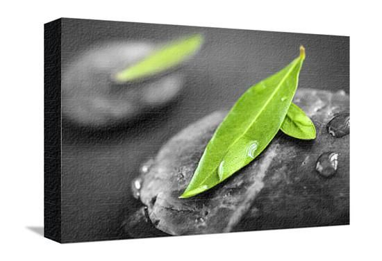 Black and white zen stones submerged in water with color accented green leaves photographic print by