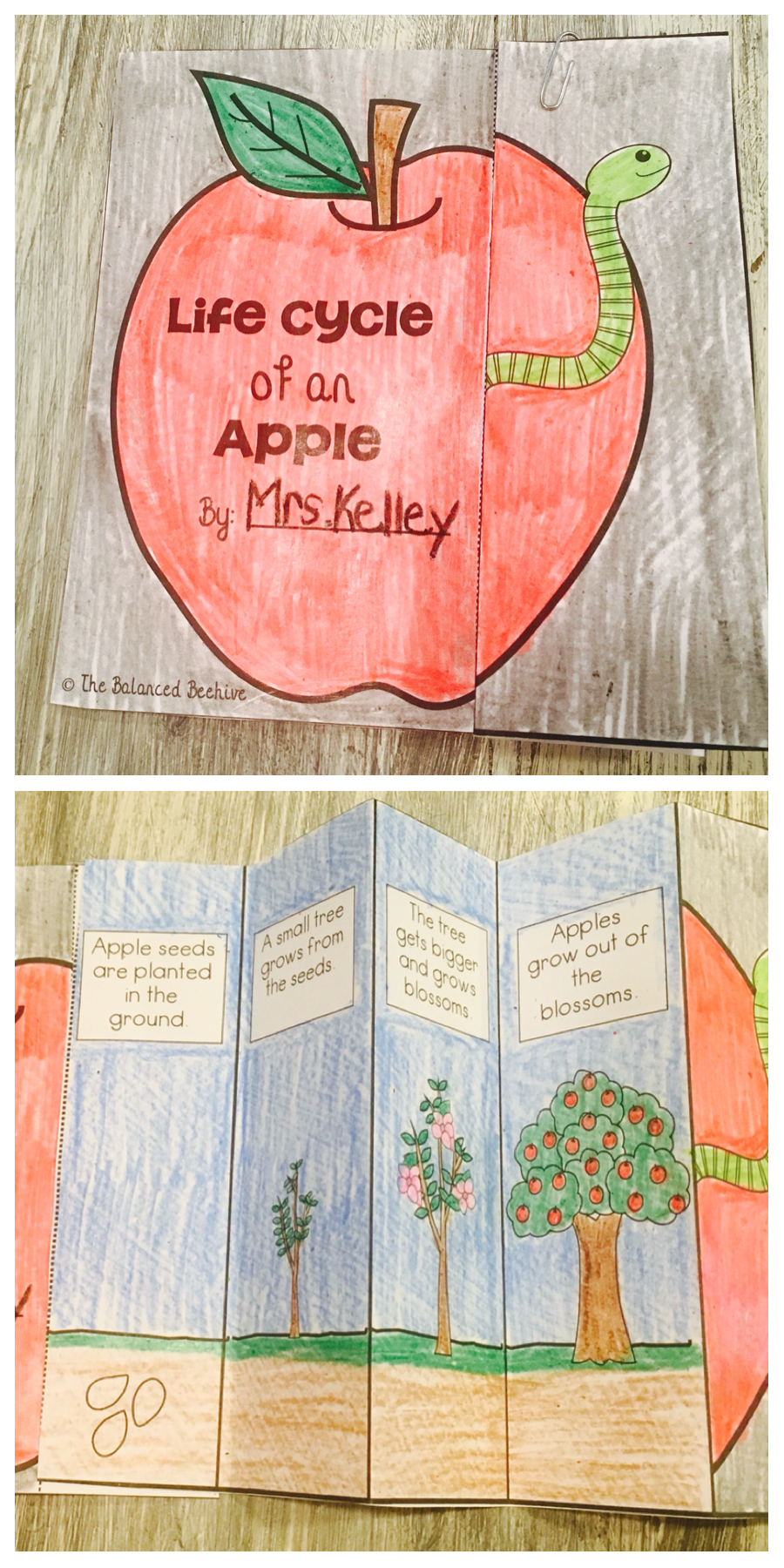 apples thematic unit johnny appleseed flip books and kindergarten