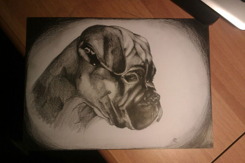 Little dog Jolie - charcoal