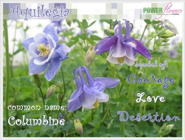 Aquilegia Or Columbines Signify Love Courage Or Desertion In The Language Of Flowers Garden Quotes Garden Works Garden