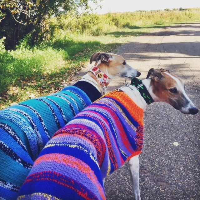 Knitted Greyhound Coat knitting pattern Download by ...