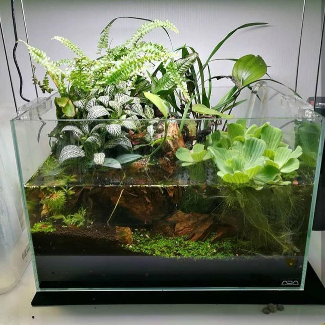 Pin by daria k on akwarium pinterest aquariums terraria and