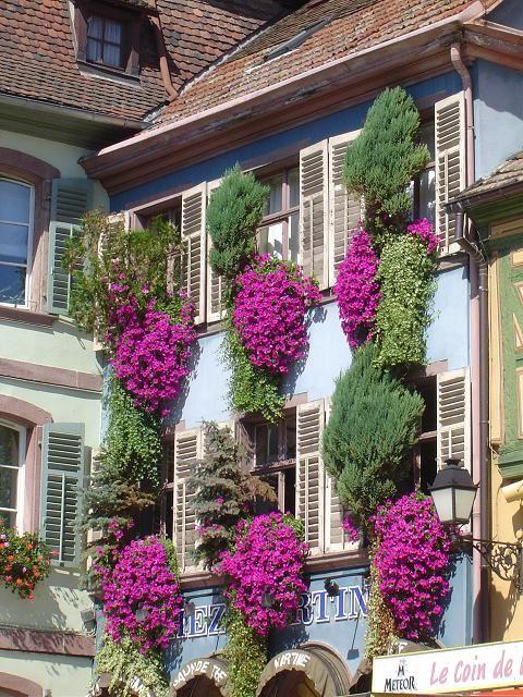Epingle Par Kathy Ward Sur Flowers And Garden Vacances De Reve Mur Vegetalise Champagne Ardenne