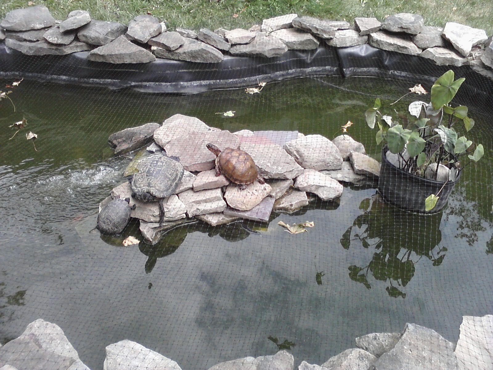 Estanque para tortugas porche y jardin pinterest for Estanque artificial para tortugas