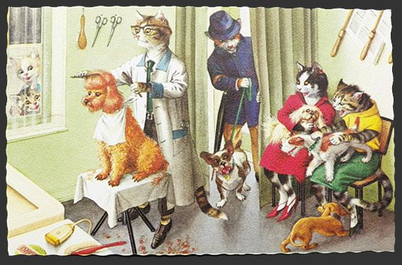 Alfred Mainzer Dressed Cats Postcard Cats At The Dog Groomer