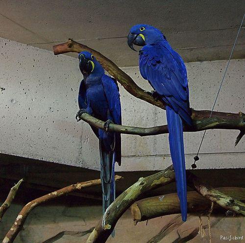 Parrots Parrot Pet Bird Macaw