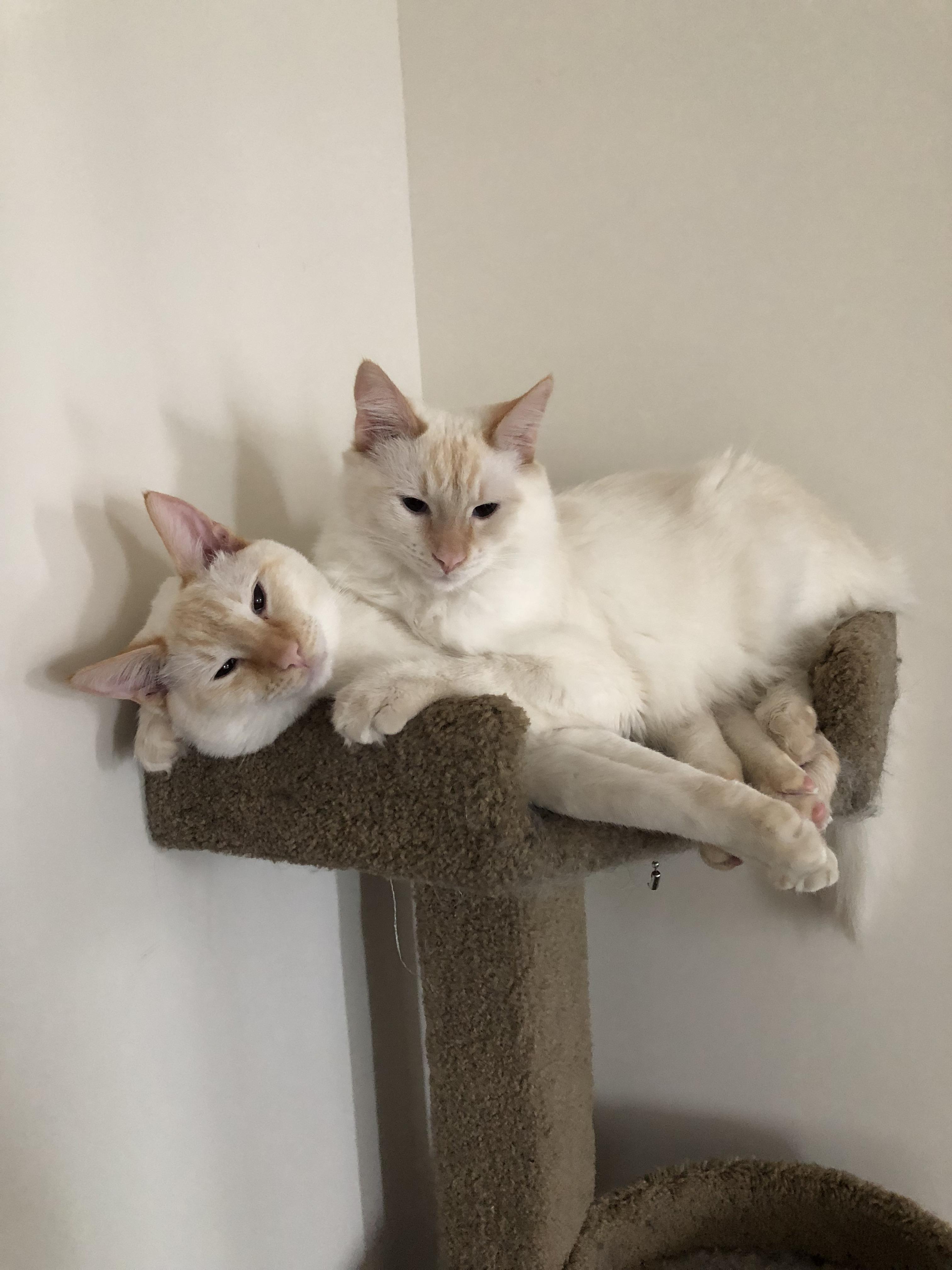 Brothershttps//i.redd.it/bqyufkgecp321.jpg Baby cats
