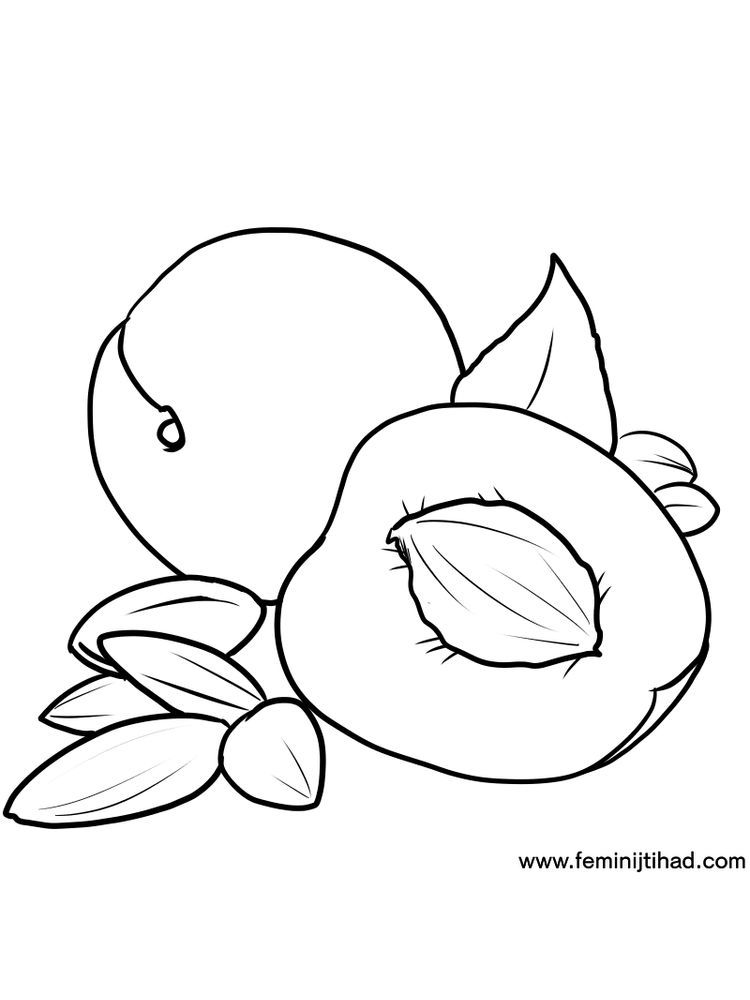 Apricot Coloring Page Free