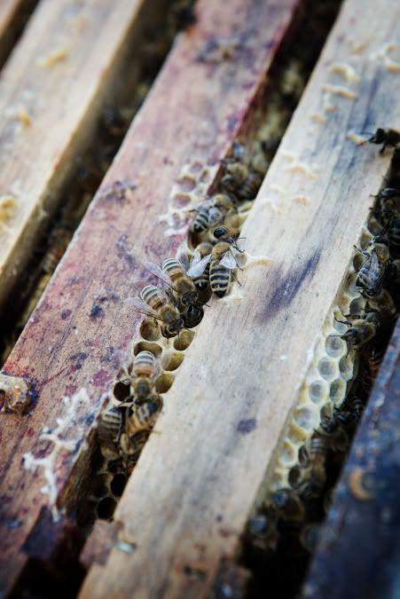 bij Intratuin kun je nu zelf honing maken met een echte imker