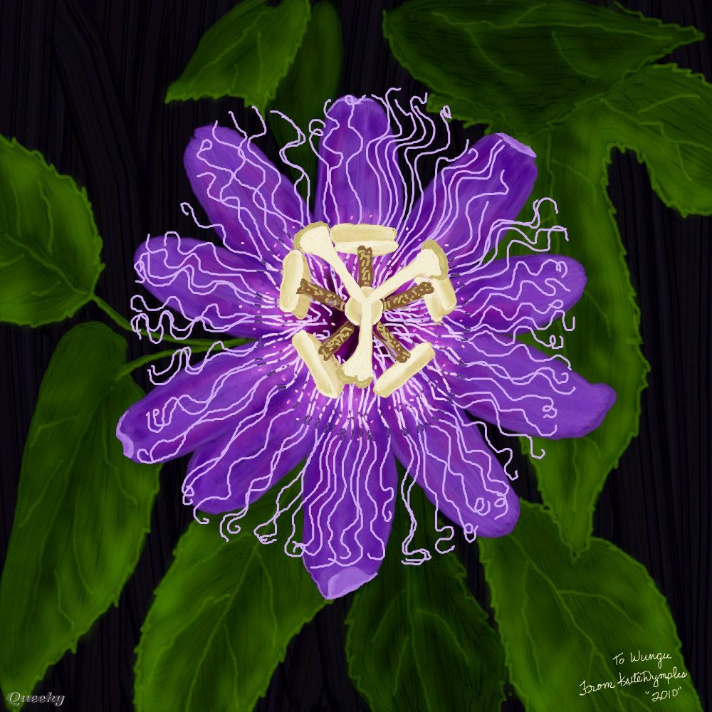 Passion Flower Purple Passion Flower A Ornamental Drawing By