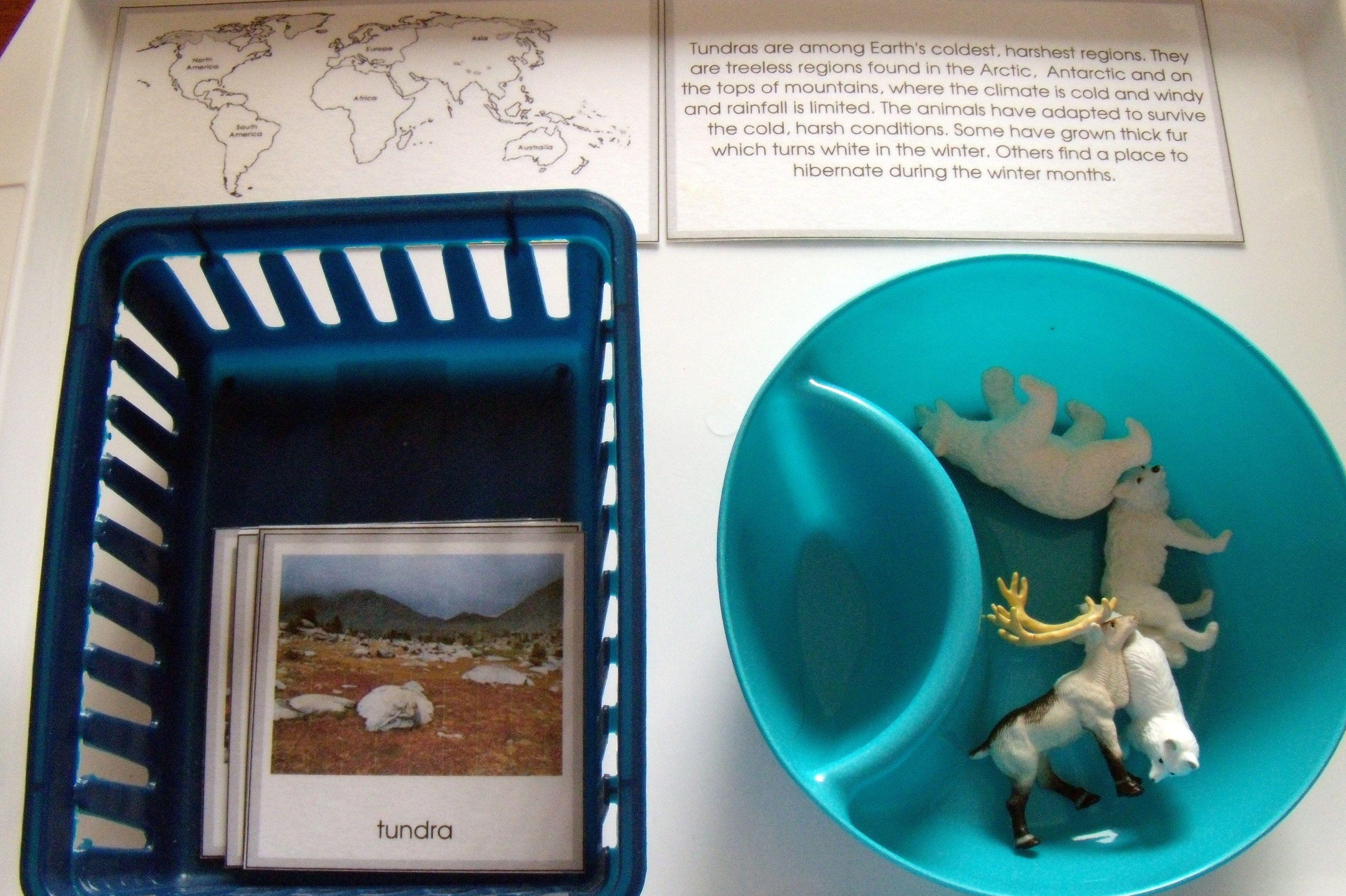 Arctic Antarctic Animals Mini Unit